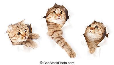 Eine Katze in Papierseite, ein abgeschiedenes Loch