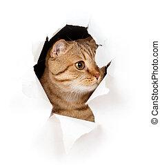 Eine Katze in Papierseite, ein Loch isoliert