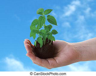 Eine Pflanze in der Hand