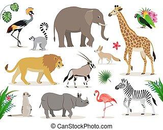 Eine Reihe süßer afrikanischer Tiere Ikonen, isoliert auf weißem Hintergrund, gekrönter Kran, Lemur, Elefant, Giraffe, Löwe, Antilope, Zebra, Suricate, Rhinoeros, Flamingo, Liebesvögel, Fennec, Vektor.