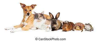 Eine Reihe von Haustieren.
