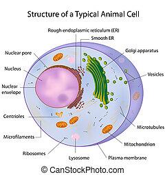 Eine typische Zelle mit Eps 10.