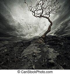 einsam, altes , dramatischer himmel, baum., aus