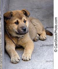 Einsamer Hund
