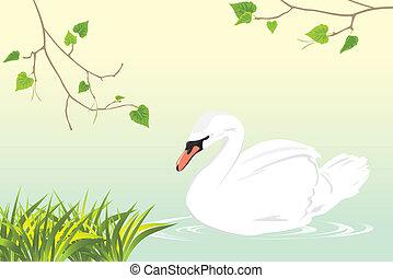 Einsamer Schwan schwimmt in einem Teich