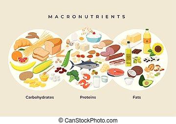 eiweiße, machen diät, -, elements., makro, macronutrients., abbildung, concept., vektor, wohnung, essen, essende, design, gesunde, vergleich, heiligenbilder, lebensmittel, kohlenhydrate, isolated., fette, haupt, infographic, gruppen