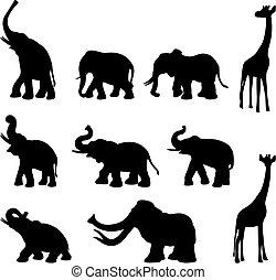 elefanten, giraffe, mommoth