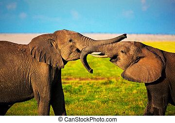 Elefanten spielen auf Savana. Safari in amboseli, kenya, afrika