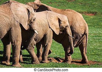 Elefantenfamilie auf afrikanischen Savanne. Safari in Amboseli, Kenya, Afrika