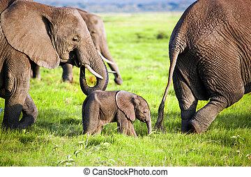 Elefantenfamilie auf Savana. Safari in amboseli, kenya, afrika