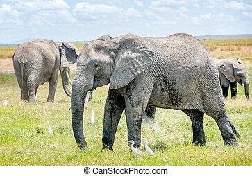 Elefantenfamilie in Kenya, Afrika.