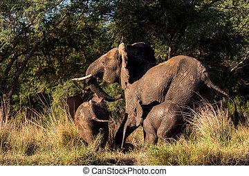 Elefantenfamilie läuft.