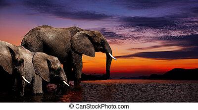 Elefantenfantasie