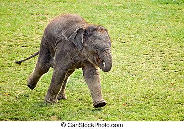 Elefantenkalb im Zoo.