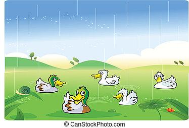 Enten, die im Regen spielen.