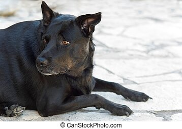Erheblicher schwarzer Hund