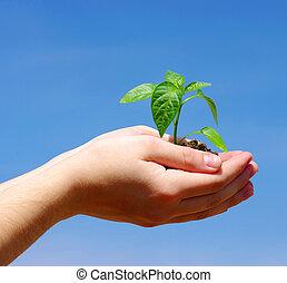 Erwachsene grüne Pflanze