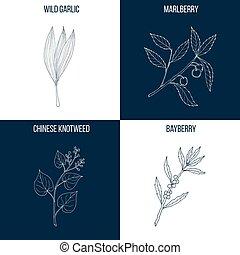 Essbare und Heilpflanzen.
