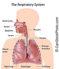 etikettiert, atmungssystem