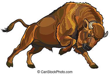 Europäische Bison.
