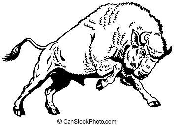 European Bison Black White.