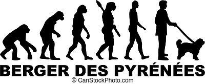 evolutionsphasen, deutsch, pyrenäen, schafhirte
