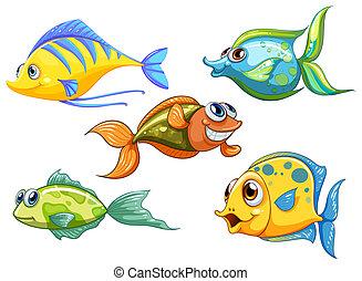 Fünf bunte Fische.