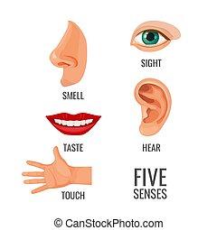Fünf Sinne mit Titeln an Körperteilen Vektorgrafik
