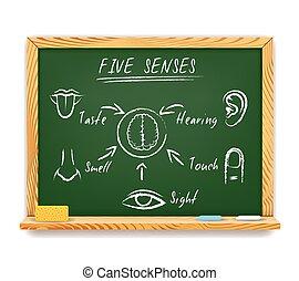 fünf sinne