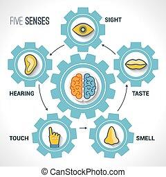 Fünf Sinneskonzept.