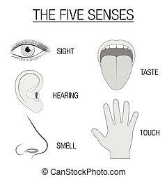Fünf Sinnessensoren.