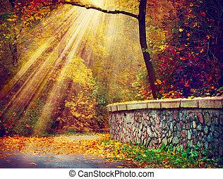 Fallen. Herbstpark. Herbstbäume in Sonnenstrahlen