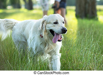 Familie mit süßem Hund im Park.