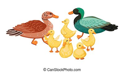 family., satz, karikatur, abbildung, entchen, vektor, duck., klein, enterich, eltern, ente