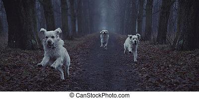 Fantastisches Bild von einem Hund
