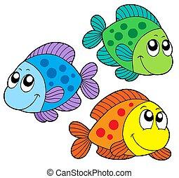 farbe, reizend, fische