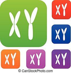 farbe, satz, chromosomen, menschliche , sammlung