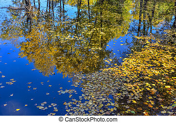 Farbenreiche Herbstlandschaft auf dem See - Schönheit der Herbst Natur