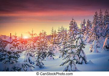 Farbenreiche Landschaft bei der Wintersonne im Bergwald.