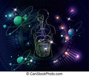 Farbige menschliche Anatomie.