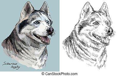 Farbige und monochrome Handzeichnung Vektorporträt von siberianischer Husky.