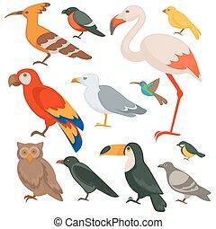 Farbige Vögel