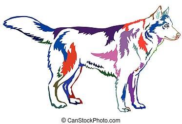 Farbiges dekoratives Portrait von Hund Sibirien Husky, Vektorgrafik.