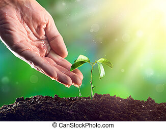 Farmers Hand wässert eine junge Pflanze. Junge Pflanze wächst im Morgenlicht