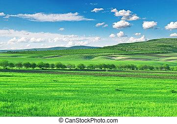 Feld, Berge und blauer Himmel