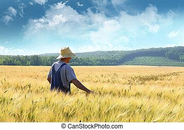 feld, gehen, weizen, durch, landwirt