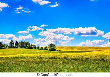 Feld gelber Blumen mit grüner Wiese.
