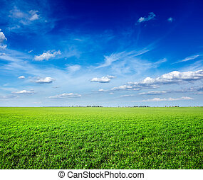 Feld grüner, frischer Gras unter blauem Himmel