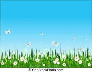 feld, grasbedeckt, vlinders