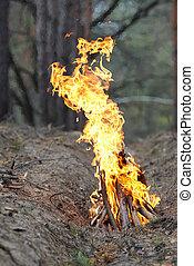 Feuer im Wald auf die Natur.
